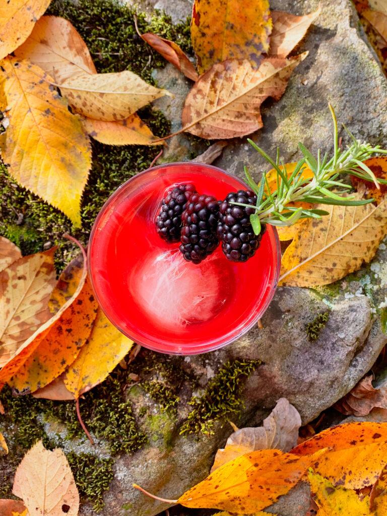 blackberry bourbon sour sitting in leaves